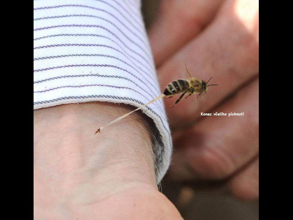 Konec včelího píchnutí