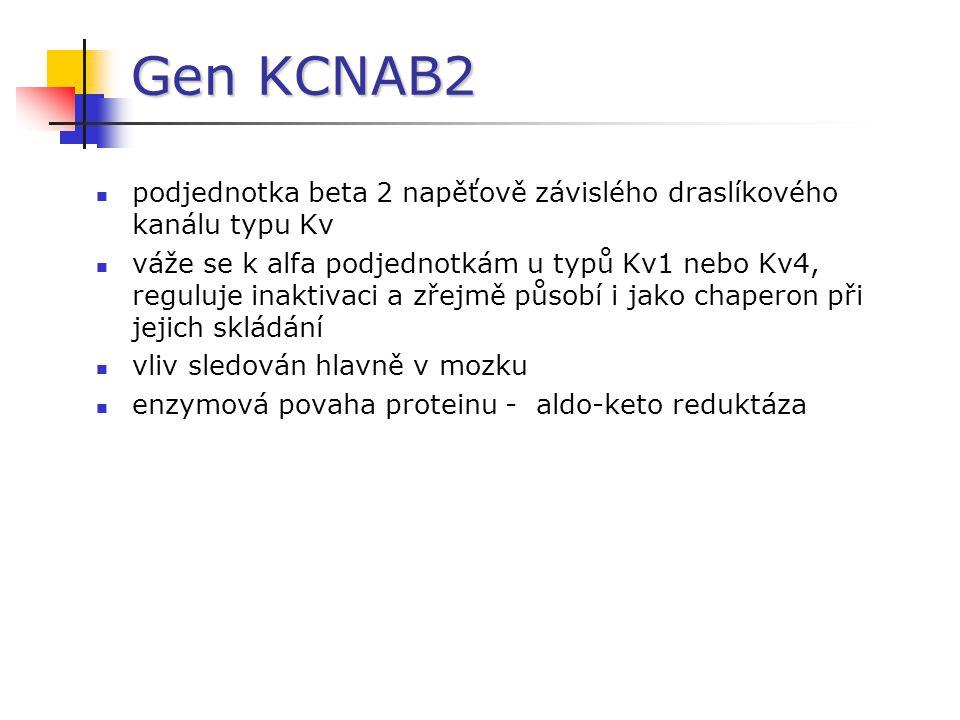 Gen KCNAB2 podjednotka beta 2 napěťově závislého draslíkového kanálu typu Kv váže se k alfa podjednotkám u typů Kv1 nebo Kv4, reguluje inaktivaci a zř