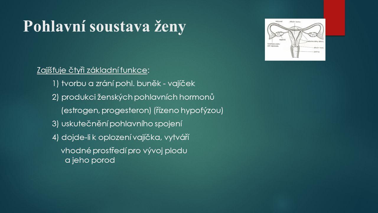 Pohlavní soustava ženy Zajišťuje čtyři základní funkce: 1) tvorbu a zrání pohl. buněk - vajíček 2) produkci ženských pohlavních hormonů (estrogen, pro