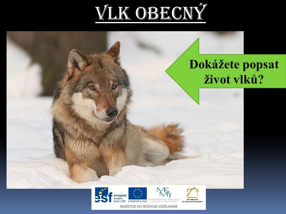 Vlk obecný  pohybuje se a loví ve smečkách  předkem psa domácího  podobný německému ovčákovi  v ČR se vyskytuje jen ve velmi malém množství CHRÁNĚNÝ DRUH