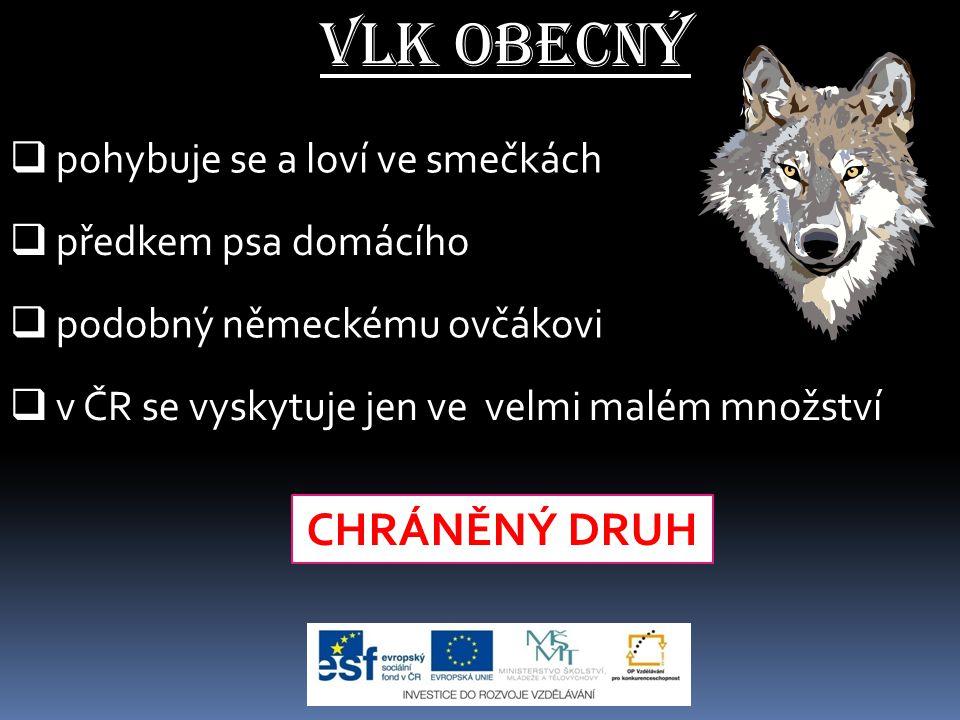 Vlk obecný - rozšíření vlka - místa, kde byl vyhuben