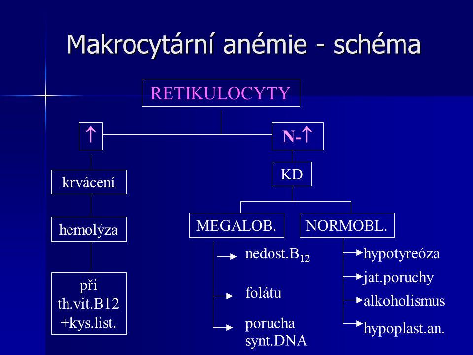 Makrocytární anémie - schéma RETIKULOCYTY  krvácení hemolýza při th.vit.B12 +kys.list.