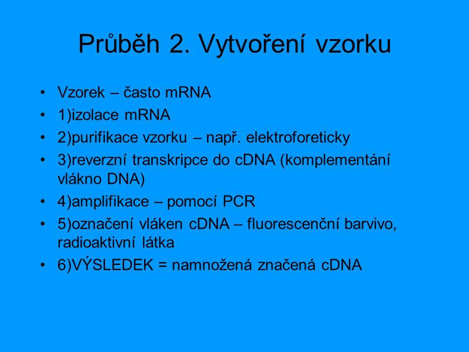 Průběh 2. Vytvoření vzorku Vzorek – často mRNA 1)izolace mRNA 2)purifikace vzorku – např. elektroforeticky 3)reverzní transkripce do cDNA (komplementá
