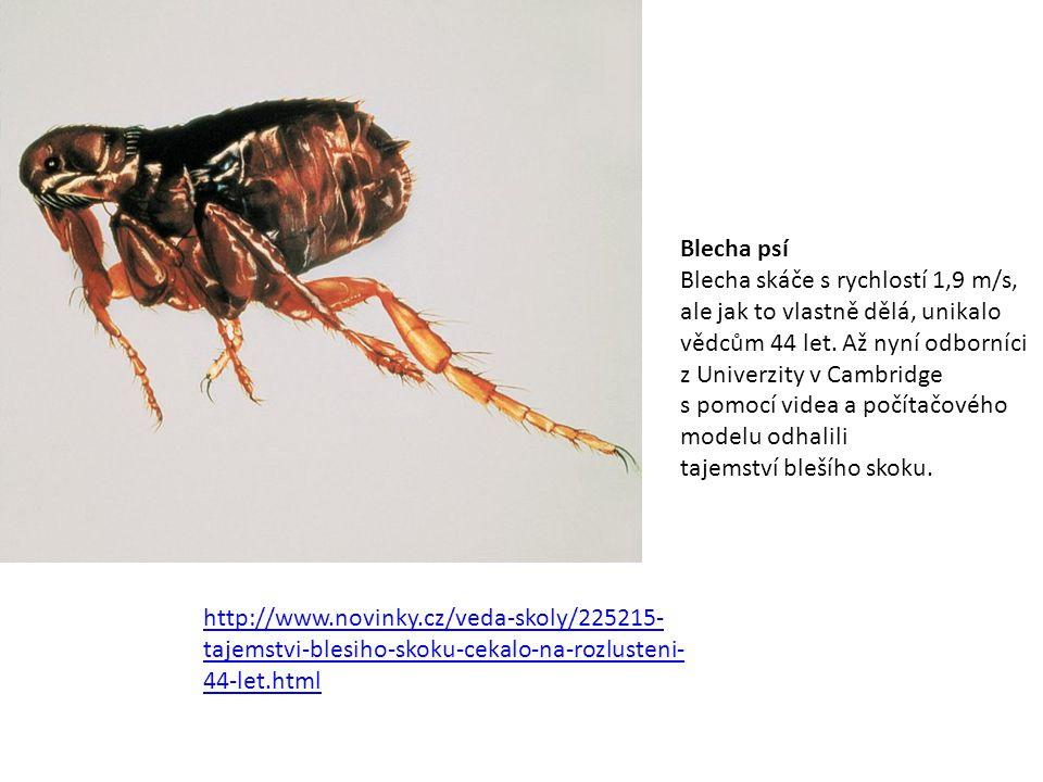 http://www.novinky.cz/veda-skoly/225215- tajemstvi-blesiho-skoku-cekalo-na-rozlusteni- 44-let.html Blecha psí Blecha skáče s rychlostí 1,9 m/s, ale ja