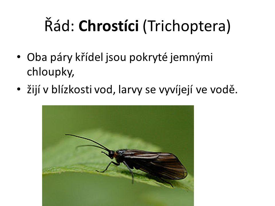 Řád: Chrostíci (Trichoptera) Oba páry křídel jsou pokryté jemnými chloupky, žijí v blízkosti vod, larvy se vyvíjejí ve vodě.