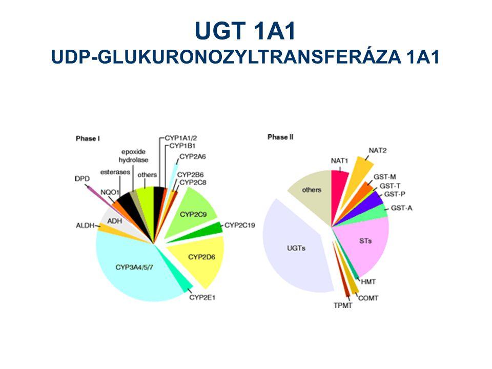 UGT 1A1 UDP-GLUKURONOZYLTRANSFERÁZA 1A1