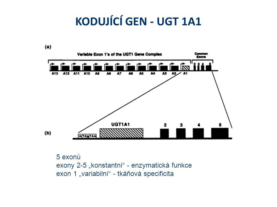 """KODUJÍCÍ GEN - UGT 1A1 5 exonů exony 2-5 """"konstantní - enzymatická funkce exon 1 """"variabilní - tkáňová specificita"""