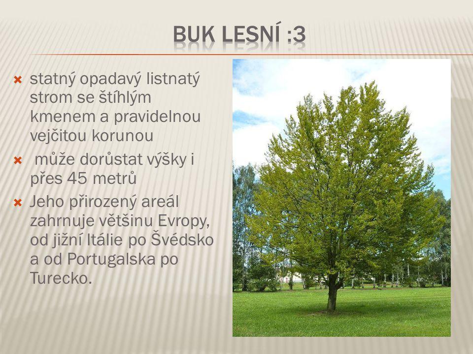  statný opadavý listnatý strom se štíhlým kmenem a pravidelnou vejčitou korunou  může dorůstat výšky i přes 45 metrů  Jeho přirozený areál zahrnuje
