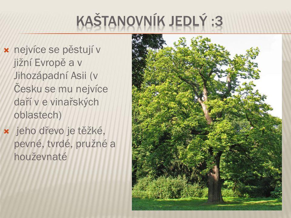  nejvíce se pěstují v jižní Evropě a v Jihozápadní Asii (v Česku se mu nejvíce daří v e vinařských oblastech)  jeho dřevo je těžké, pevné, tvrdé, pr