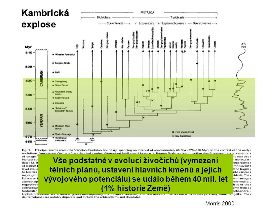 Morris 2000 Kambrická explose Vše podstatné v evoluci živočichů (vymezení tělních plánů, ustavení hlavních kmenů a jejich vývojového potenciálu) se událo během 40 mil.