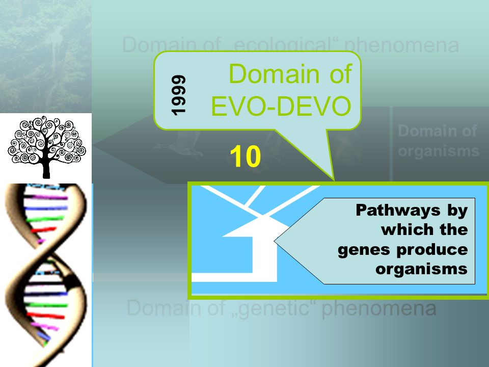 "Domain of ""genetic phenomena Domain of ""ecological phenomena Domain of organisms Pathways by which the genes produce organisms Domain of EVO-DEVO 1999 10"