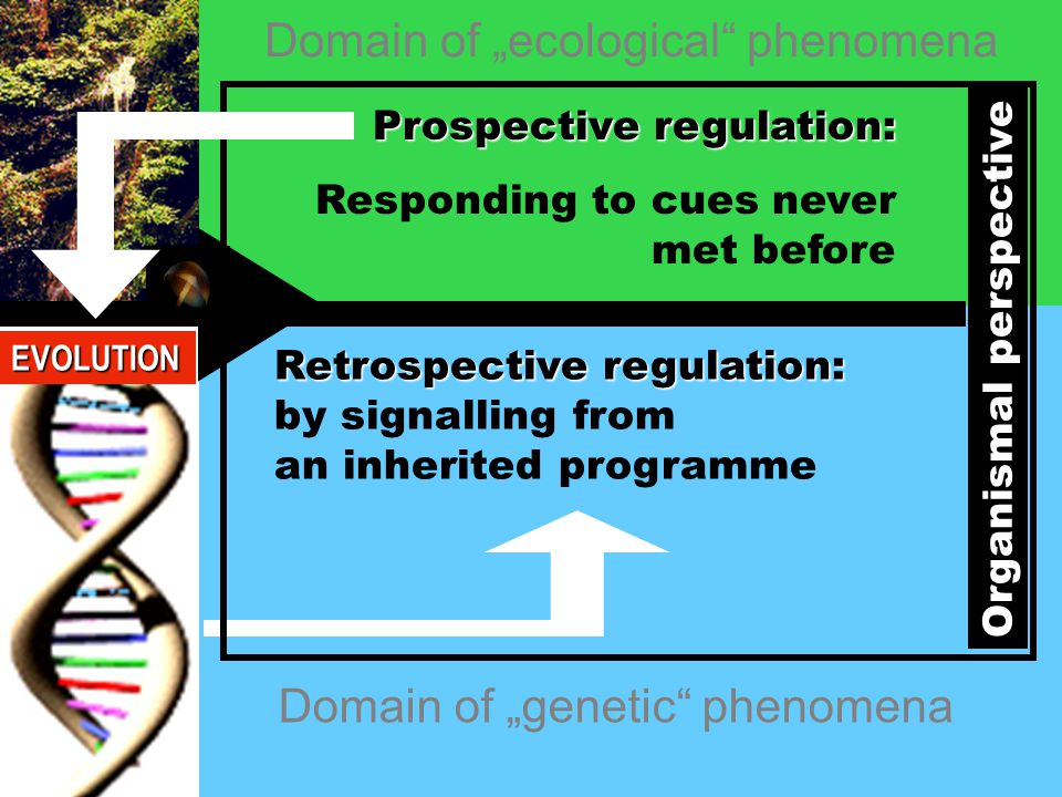 "Domain of ""genetic phenomena Domain of ""ecological phenomena Prospective regulation: Responding to cues never met before Retrospective regulation: by signalling from an inherited programme Organismal perspective EVOLUTION"