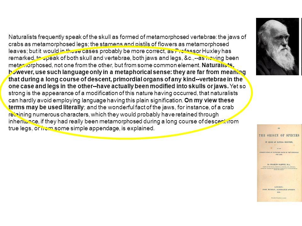 """Domain of """"genetic phenomena Domain of """"ecological phenomena Stochastické mnohofaktorové interakce organismů v proměnlivém prostředí: doména jedinečných nepředvídatelných událostí Struktura a funkce genomu, semanika molekulárních regulací a jejich syntagmatické vzorce (signální kaskády, moduly, spínače etc.) Historical-narrative explanations only: stories Open to testing and nomological- deductive explanations"""