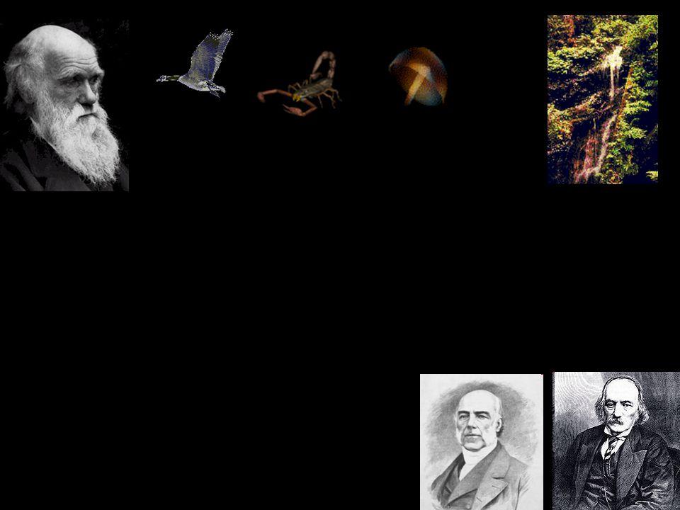 "Domain of ""genetic phenomena Domain of ""ecological phenomena What makes the boundary ."