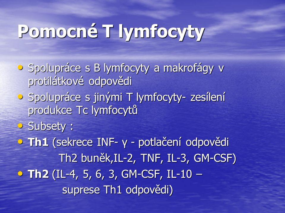 Pomocné T lymfocyty Spolupráce s B lymfocyty a makrofágy v protilátkové odpovědi Spolupráce s B lymfocyty a makrofágy v protilátkové odpovědi Spoluprá
