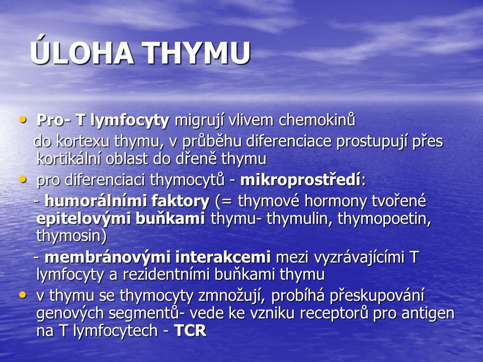 ÚLOHA THYMU Pro- T lymfocyty migrují vlivem chemokinů Pro- T lymfocyty migrují vlivem chemokinů do kortexu thymu, v průběhu diferenciace prostupují př