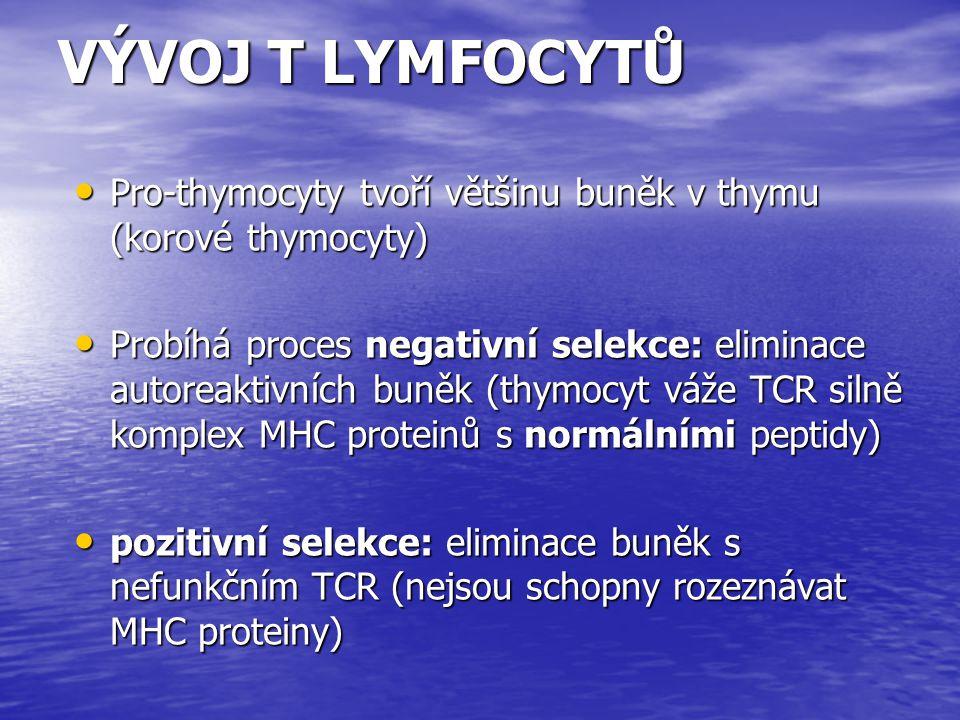 VÝVOJ T LYMFOCYTŮ Pro-thymocyty tvoří většinu buněk v thymu (korové thymocyty) Pro-thymocyty tvoří většinu buněk v thymu (korové thymocyty) Probíhá pr
