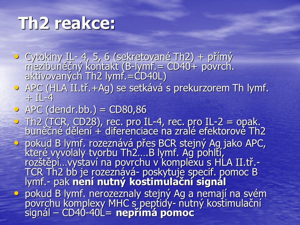 Th2 reakce: Cytokiny IL- 4, 5, 6 (sekretované Th2) + přímý mezibuněčný kontakt (B-lymf.= CD40+ povrch. aktivovaných Th2 lymf.=CD40L) Cytokiny IL- 4, 5