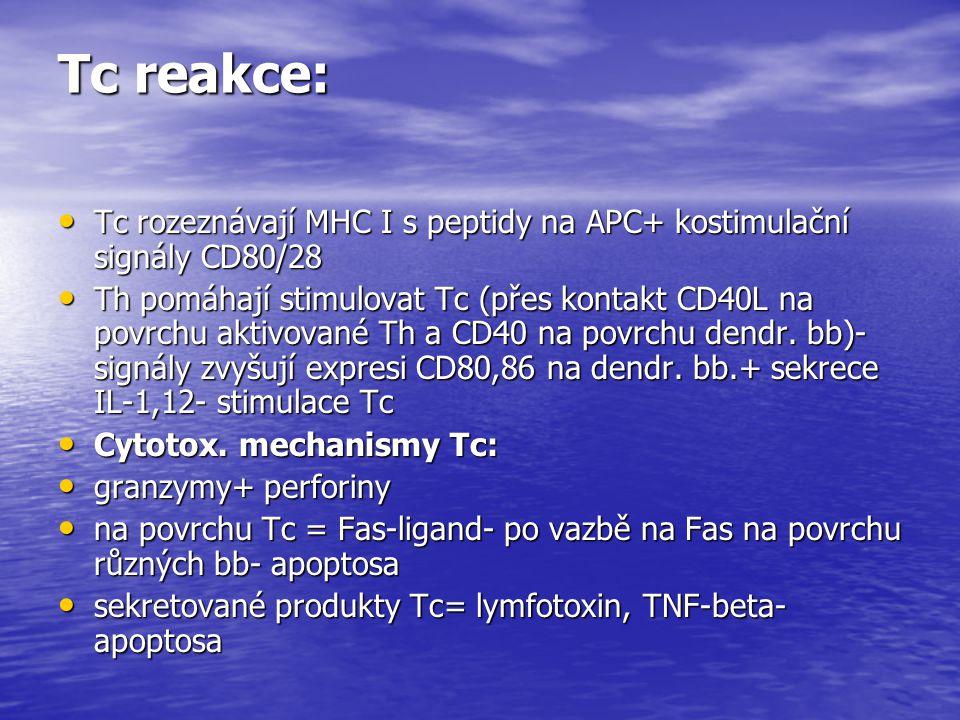 Tc reakce: Tc rozeznávají MHC I s peptidy na APC+ kostimulační signály CD80/28 Tc rozeznávají MHC I s peptidy na APC+ kostimulační signály CD80/28 Th