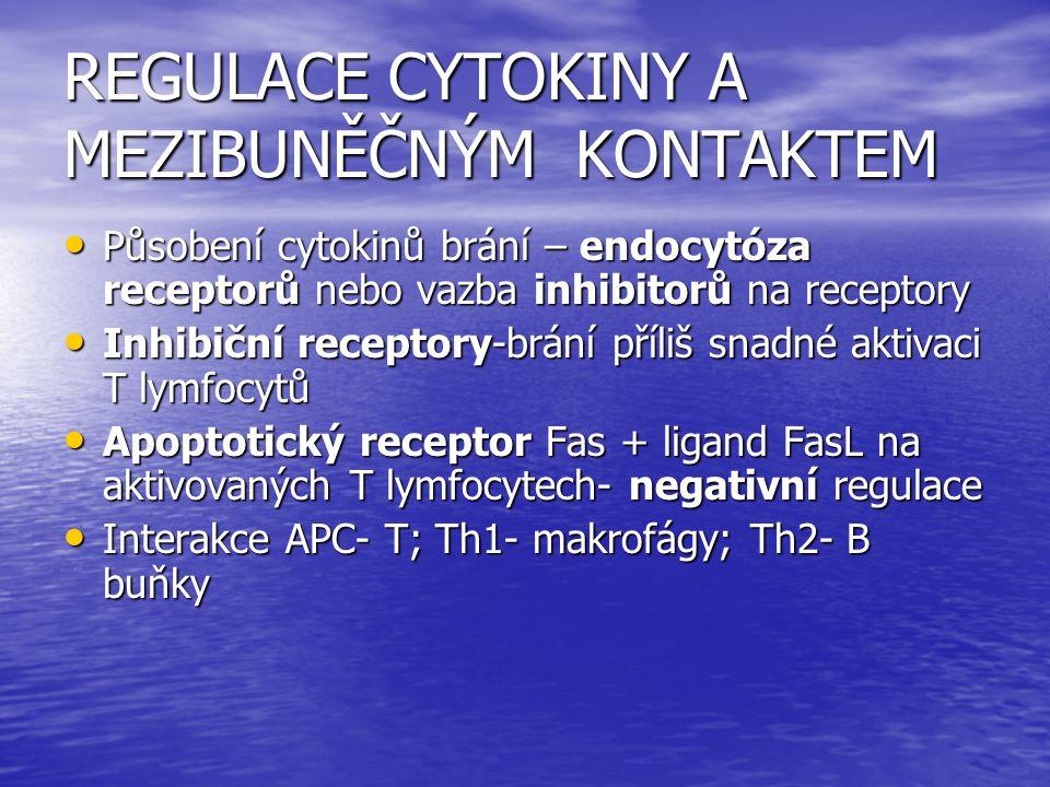 REGULACE CYTOKINY A MEZIBUNĚČNÝM KONTAKTEM Působení cytokinů brání – endocytóza receptorů nebo vazba inhibitorů na receptory Působení cytokinů brání –