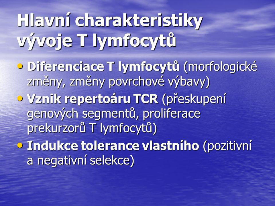 Hlavní charakteristiky vývoje T lymfocytů Diferenciace T lymfocytů (morfologické změny, změny povrchové výbavy) Diferenciace T lymfocytů (morfologické