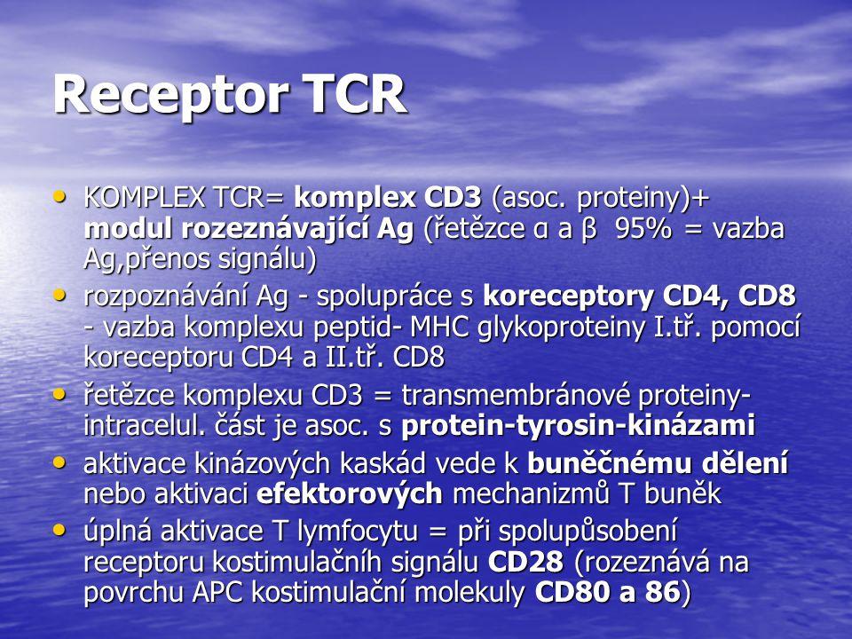 Receptor TCR KOMPLEX TCR= komplex CD3 (asoc. proteiny)+ modul rozeznávající Ag (řetězce α a β 95% = vazba Ag,přenos signálu) KOMPLEX TCR= komplex CD3
