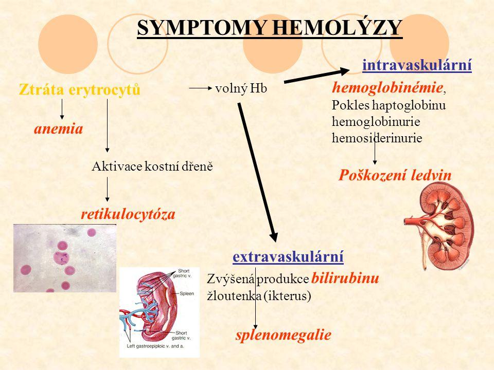 SYMPTOMY HEMOLÝZY Ztráta erytrocytů anemia Aktivace kostní dřeně retikulocytóza volný Hb hemoglobinémie, Pokles haptoglobinu hemoglobinurie hemosideri