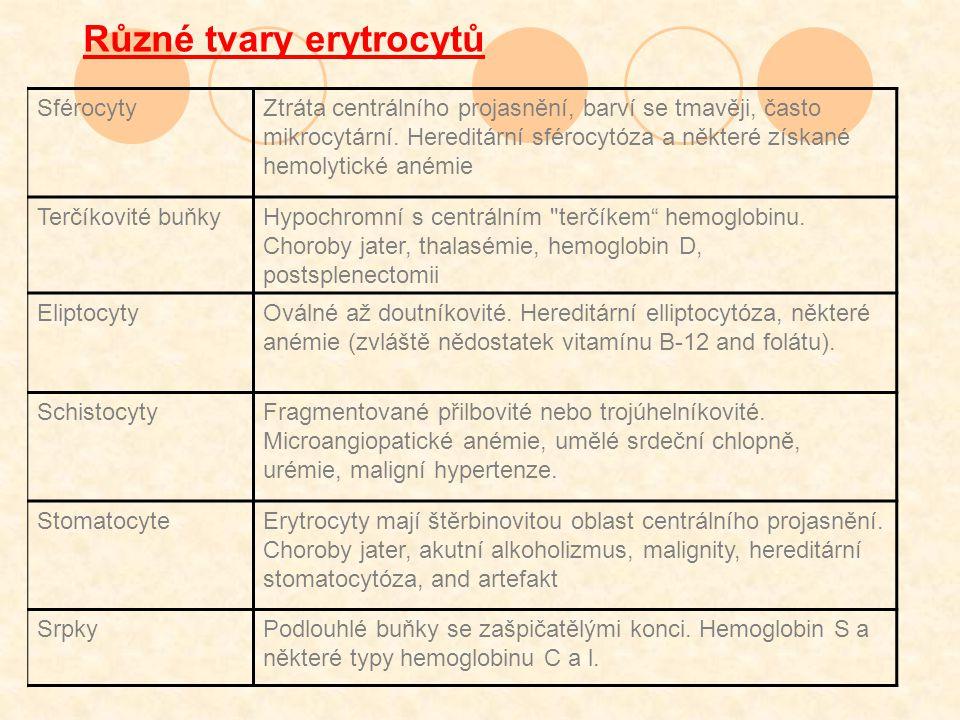 Různé tvary erytrocytů SférocytyZtráta centrálního projasnění, barví se tmavěji, často mikrocytární.