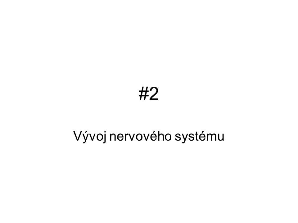 #2#2 Vývoj nervového systému