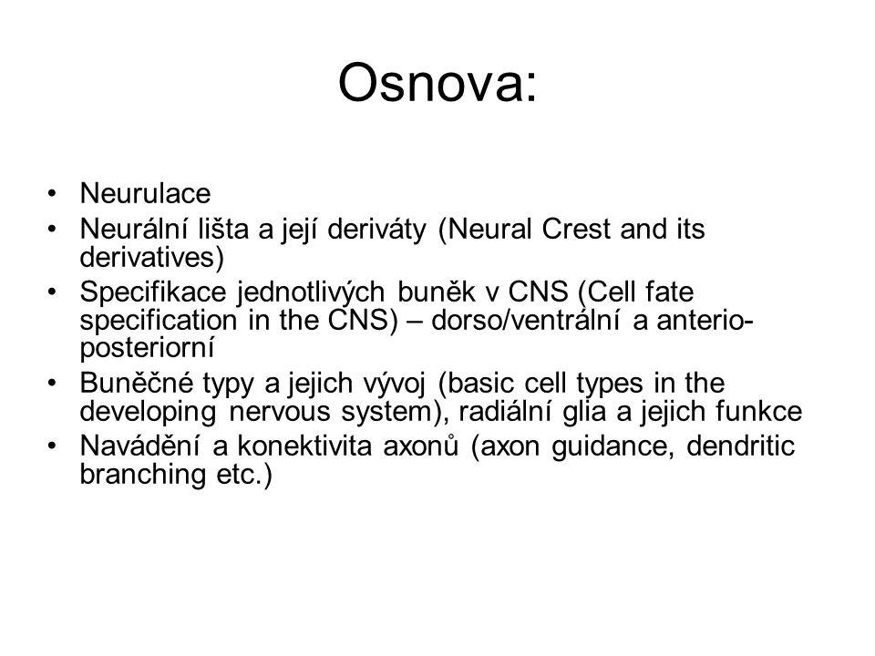 Osnova: Neurulace Neurální lišta a její deriváty (Neural Crest and its derivatives) Specifikace jednotlivých buněk v CNS (Cell fate specification in t
