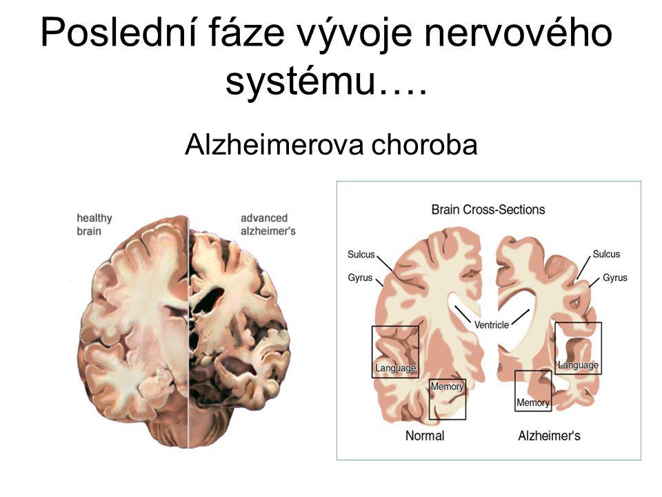 Alzheimerova choroba Poslední fáze vývoje nervového systému….