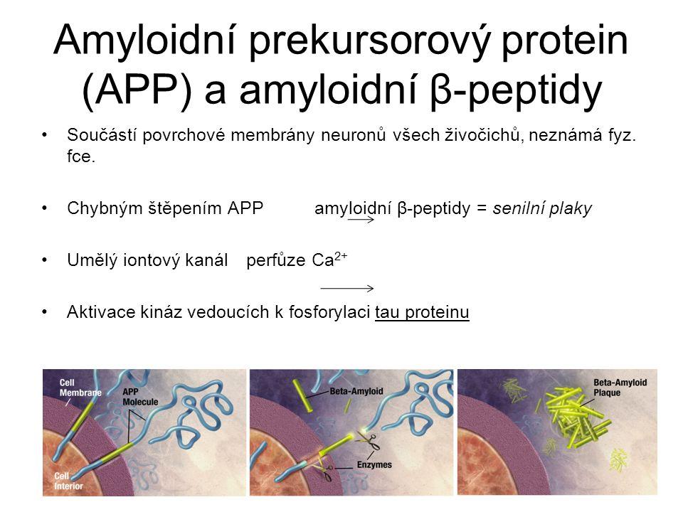 Amyloidní prekursorový protein (APP) a amyloidní β-peptidy Součástí povrchové membrány neuronů všech živočichů, neznámá fyz. fce. Chybným štěpením APP