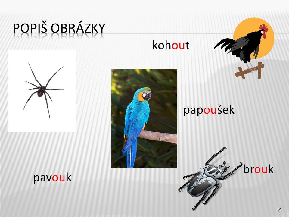 kohout 3 pavouk brouk papoušek