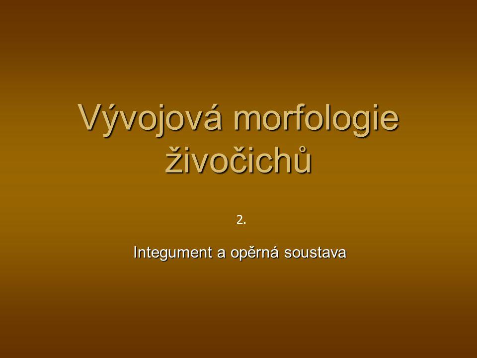 Vývojová morfologie živočichů Integument a opěrná soustava 2.