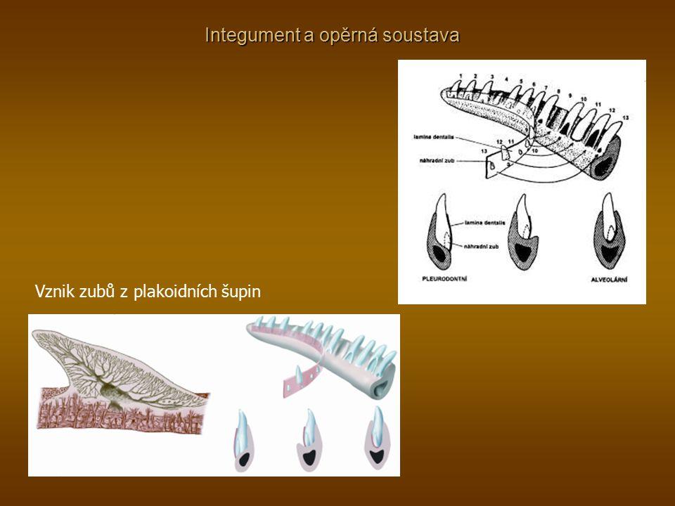 Vznik zubů z plakoidních šupin