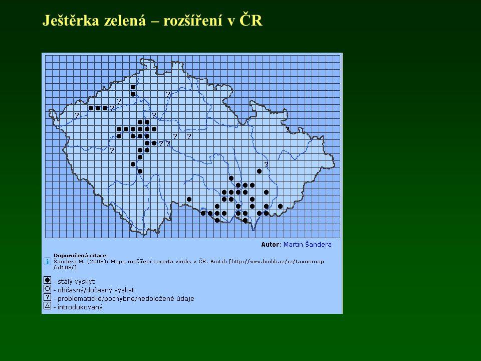 Ještěrka zelená – rozšíření v ČR
