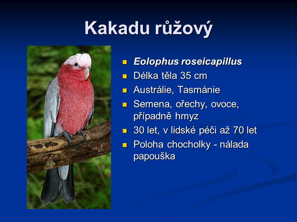 Kakadu růžový Eolophus roseicapillus Délka těla 35 cm Austrálie, Tasmánie Semena, ořechy, ovoce, případně hmyz 30 let, v lidské péči až 70 let Poloha chocholky - nálada papouška