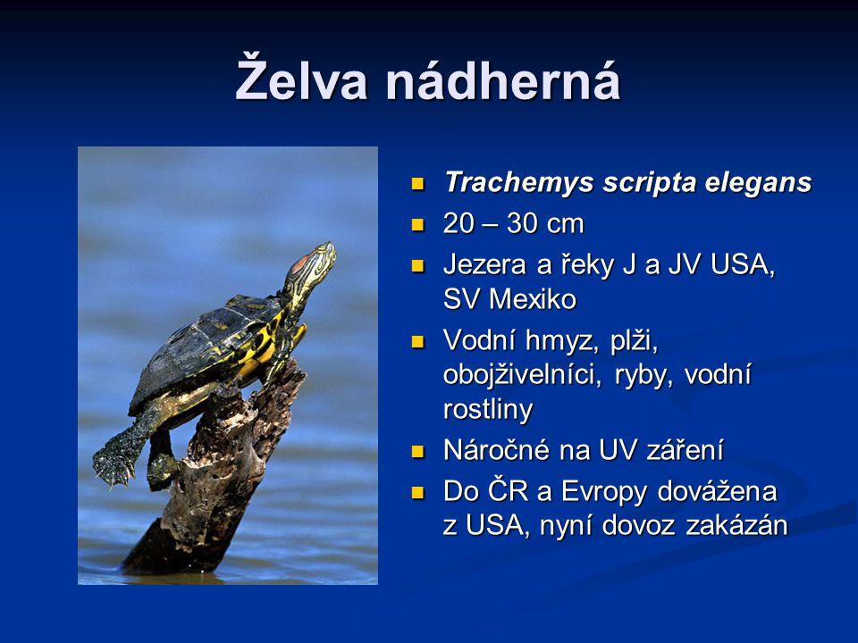 Želva nádherná Trachemys scripta elegans 20 – 30 cm Jezera a řeky J a JV USA, SV Mexiko Vodní hmyz, plži, obojživelníci, ryby, vodní rostliny Náročné na UV záření Do ČR a Evropy dovážena z USA, nyní dovoz zakázán
