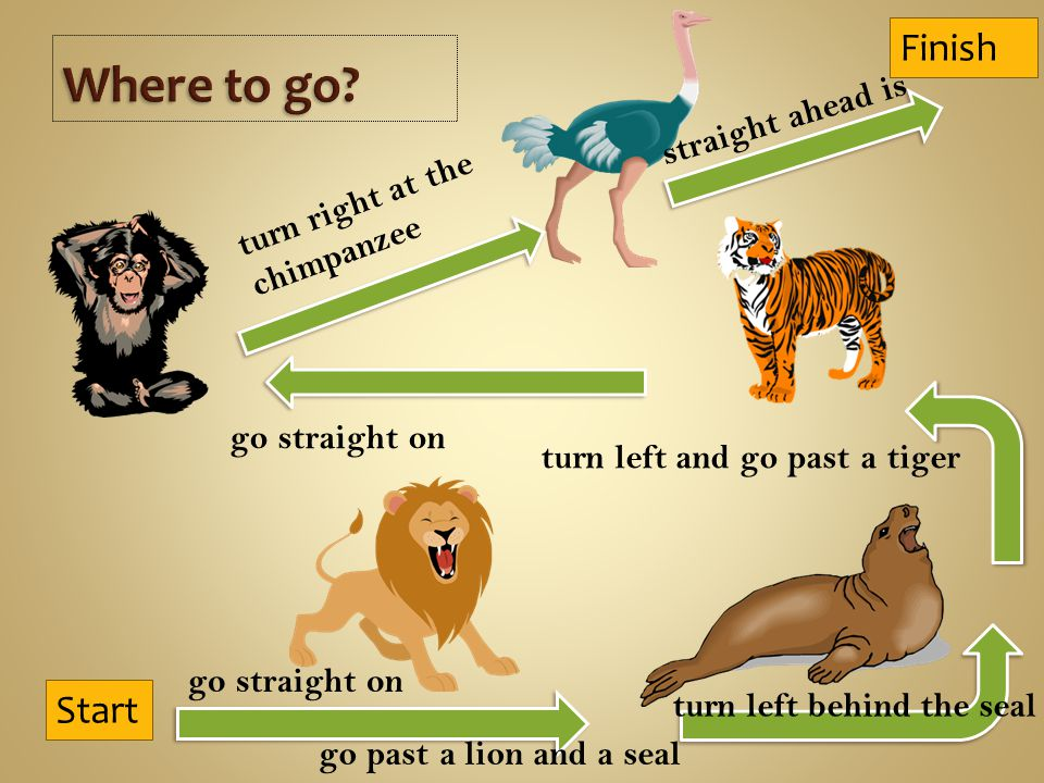 Start Finish go straight on go past a lion and a seal turn left behind the seal turn left and go past a tiger go straight on turn right at the chimpanzee straight ahead is