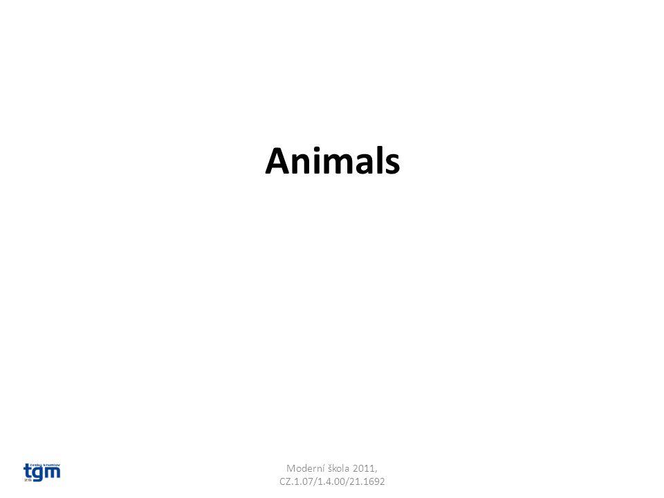 Animals Moderní škola 2011, CZ.1.07/1.4.00/21.1692