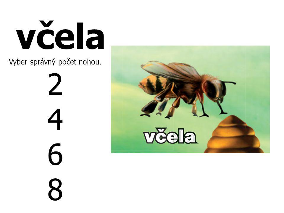 včela Vyber správný počet nohou. 2 4 6 8