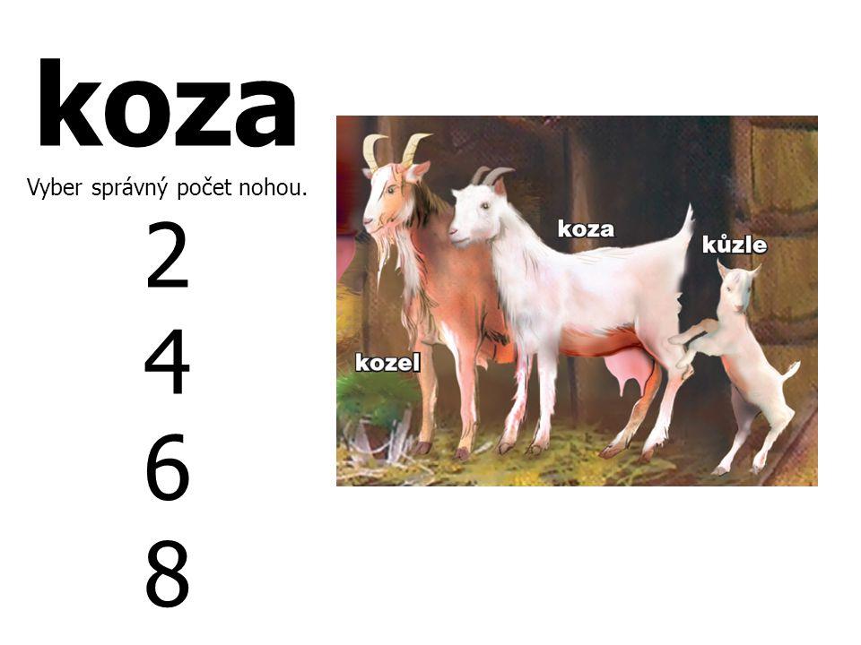 koza Vyber správný počet nohou. 2 4 6 8