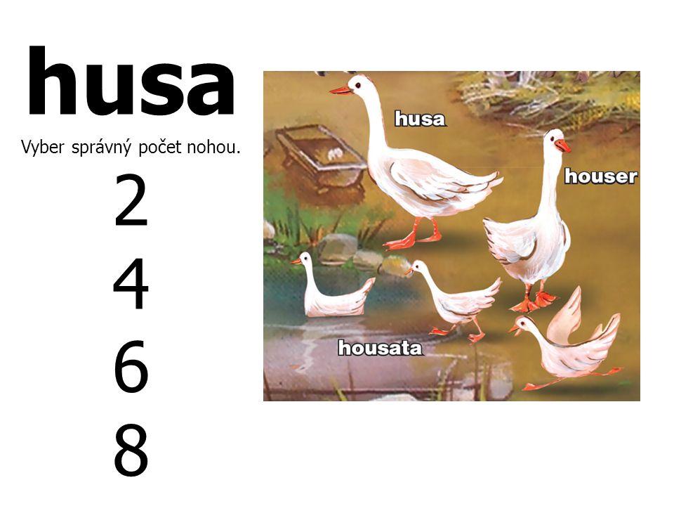husa Vyber správný počet nohou. 2 4 6 8