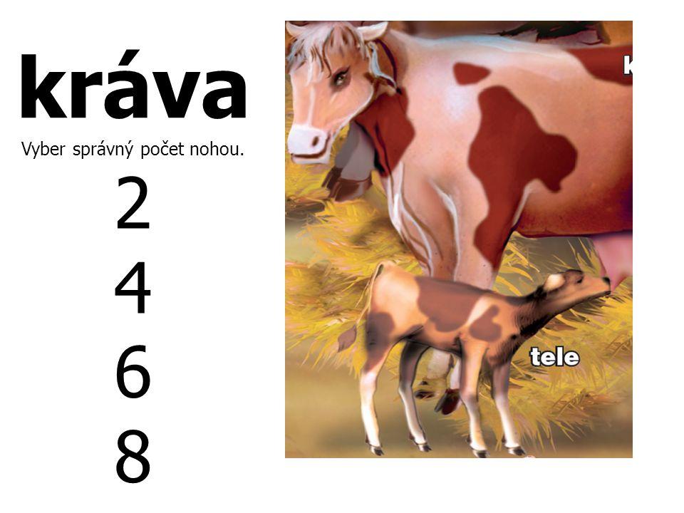 kráva Vyber správný počet nohou. 2 4 6 8