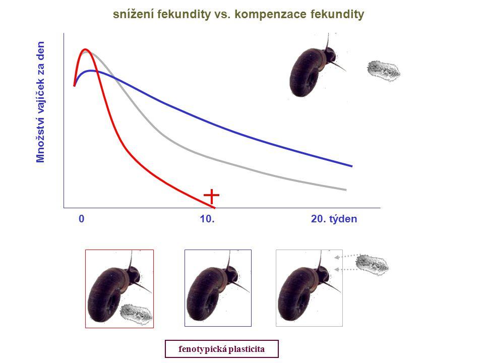 Množství vajíček za den 0 10.20. týden snížení fekundity vs.