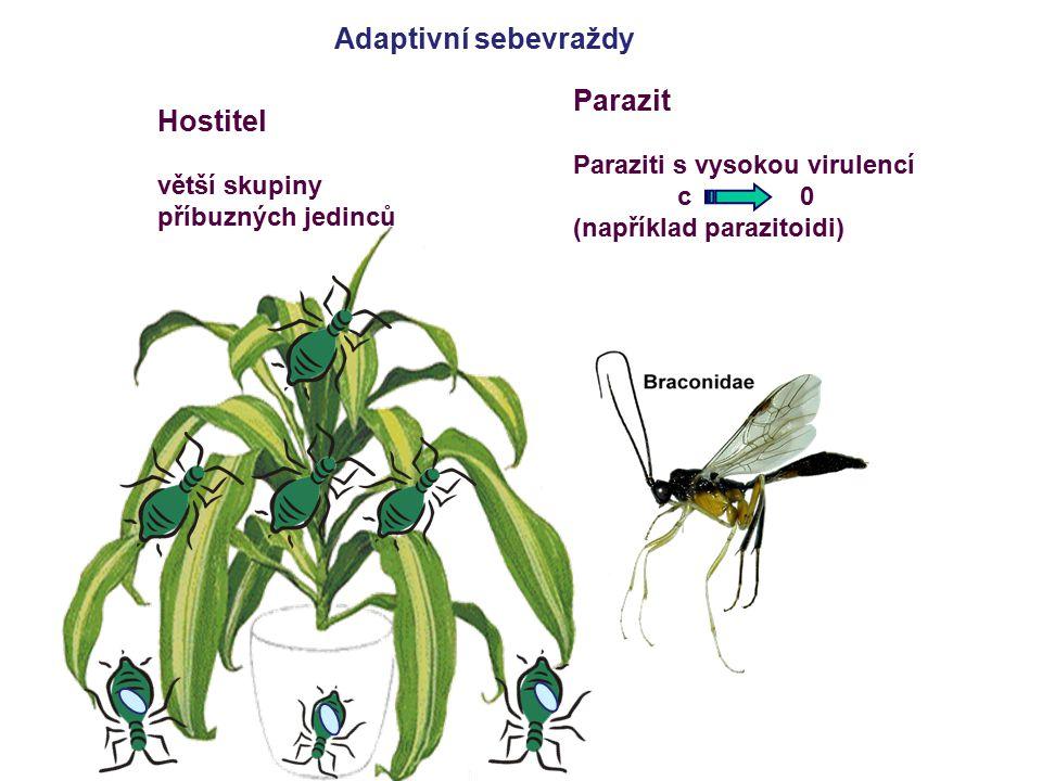 Adaptivní sebevraždy Hostitel větší skupiny příbuzných jedinců Parazit Paraziti s vysokou virulencí c 0 (například parazitoidi)