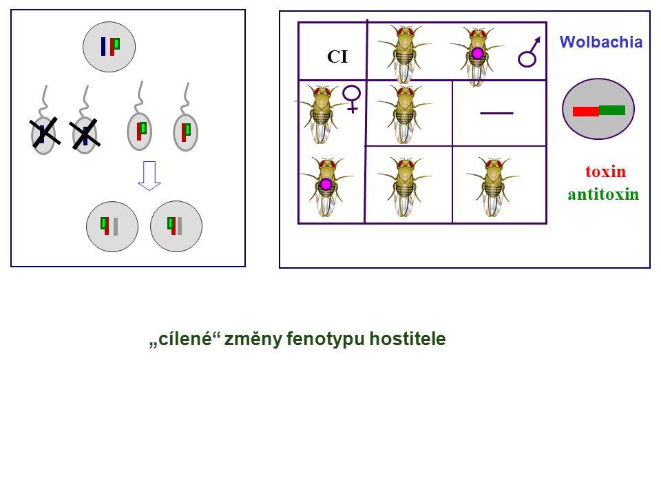 """CI toxin antitoxin Wolbachia """"cílené změny fenotypu hostitele"""