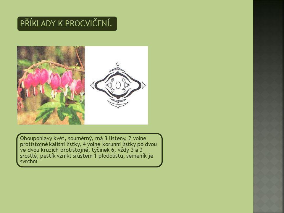 PŘÍKLADY K PROCVIČENÍ. Oboupohlavý květ, souměrný, má 3 listeny, 2 volné protistojné kališní lístky, 4 volné korunní lístky po dvou ve dvou kruzích pr