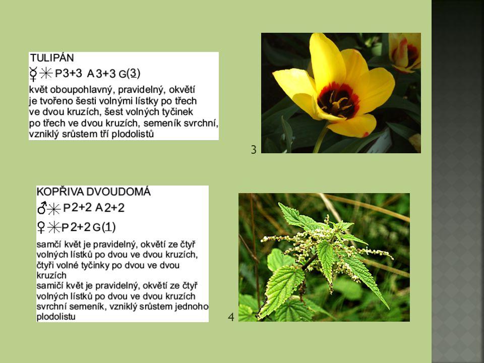 Pro grafické znázornění květu květním diagramem využíváme také mezinárodních značek.