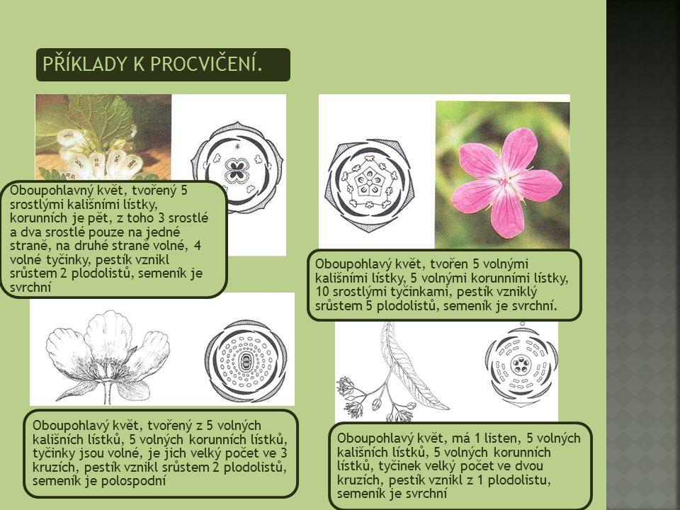 PŘÍKLADY K PROCVIČENÍ. Oboupohlavný květ, tvořený 5 srostlými kališními lístky, korunních je pět, z toho 3 srostlé a dva srostlé pouze na jedné straně